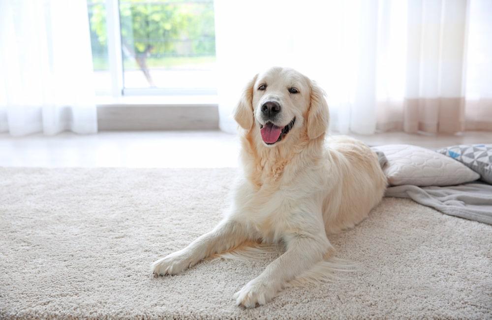 Pielegnacja dywanow