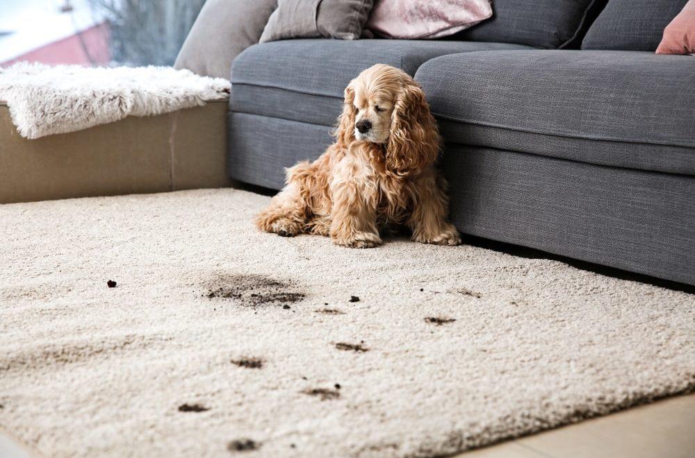 historia dywanu w pigulce
